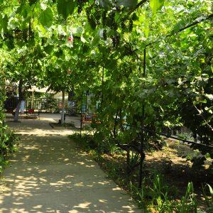 Фото прохода через виноградную арку в частном отеле на Черном море