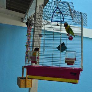 Фото попугая в клетке в мини-отеле Попугай