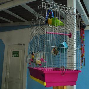 Фото попугайчиков в мини-отеле на Черном море в Курортном