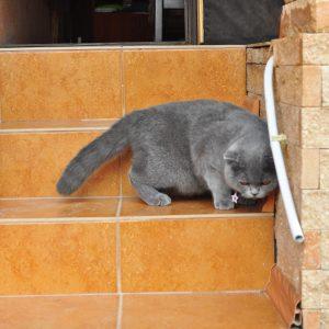 Фото хозяйского котика на базе отдыха Лагуна в Коблево