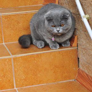 Фото котика на базе отдыха в Коблево Лагуна